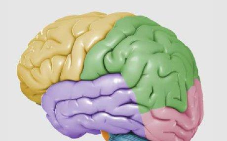 FINR Interactive Brain