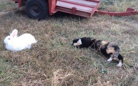 Meet Barn Cat