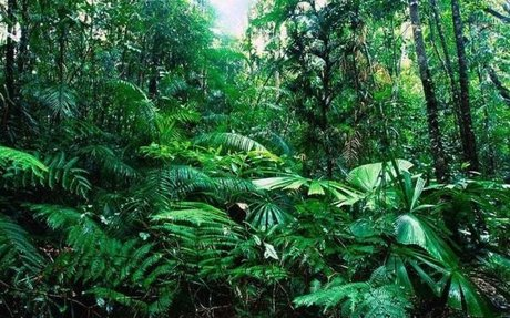 Tropical Rainforest Biome Facts