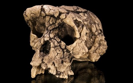 Bare bones: Five human ancestors known only from a few fossils