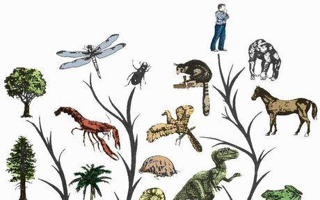 Evolution of Animals: Essay on the Evolution of Animals