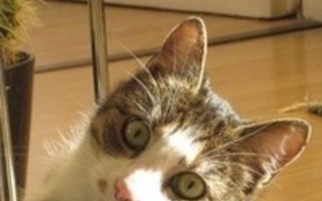 Macskamentők blog