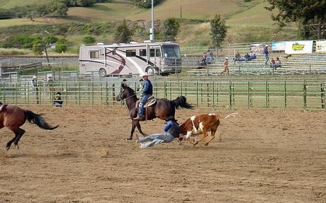 Steer wrestling - Wikipedia