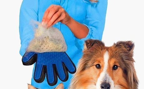 Pet Grooming Glove for Early Detection