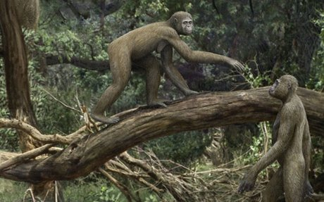 This ancient hominid used unusual hips to combine walking and climbing
