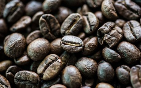 The Scientists Fighting to Save Us From a World Without Coffee