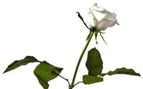 Cheap Cremations Melbourne I Funerals in Melbourne