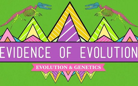 Evolution and Genetics