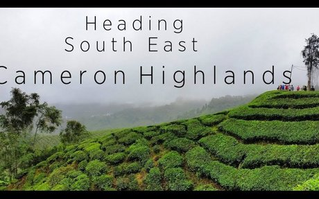 CAMERON HIGHLANDS - Malaysia  |  Heading South East Series