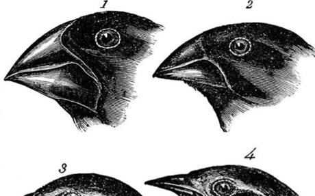 Evolution in action: from genetic change to new species