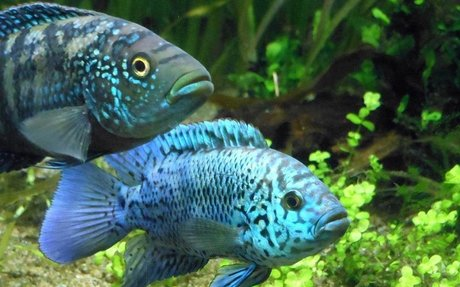 Akvaristák