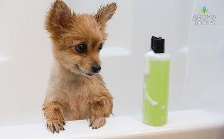 Pet Shampoo with Essential Oils