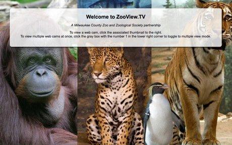 ZooView.tv