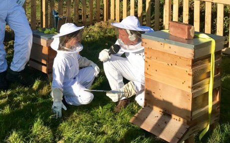 We buzzed when the BBC came to broadcast our bees
