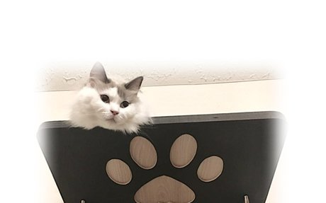 Floating Cat Wall Shelves & Cat Wall Trees | Purrfectly Catastic