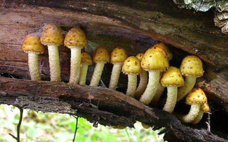 Fungi Decomposers