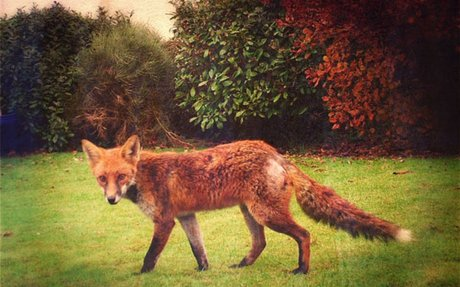 The fox website: one site with all the answers about foxes