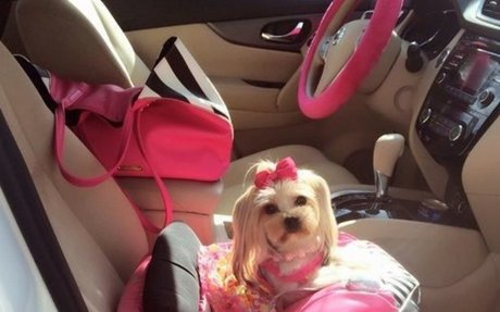 Tips on Driving With Your Maltese Dog