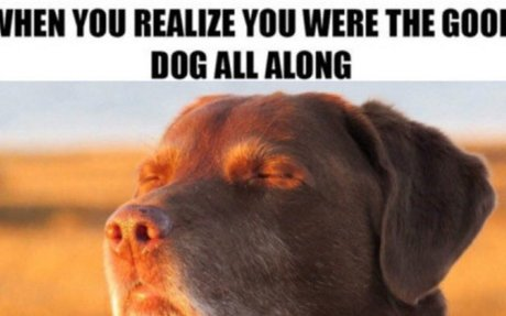 The 100 Best Dog Memes Ever