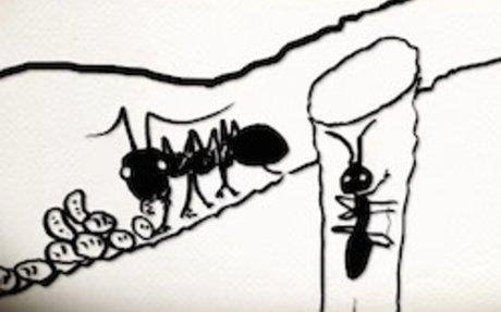 Dans les coulisses d'une colonie de fourmis
