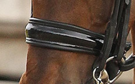 Dressage: German Federation Reminds Members Not to Trim Whiskers and Ears