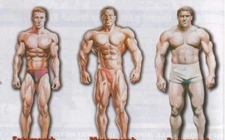Ectomorph and vegetarian
