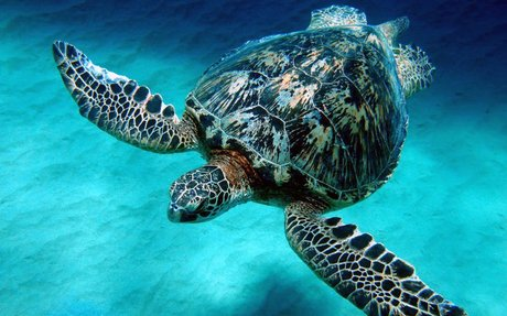 Basic Facts About Sea Turtles