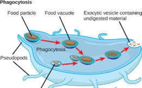 Protists nutritions