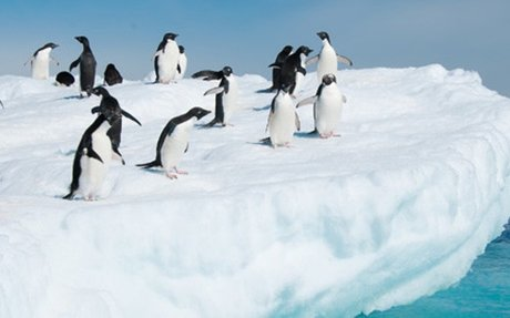 The Top 5 Things To Do in Antarctica | Viator