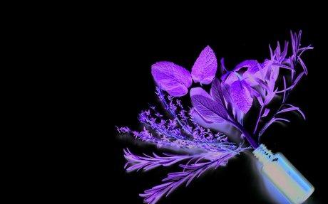 Healing Power of Aromatherapy | Chicago Health magazine