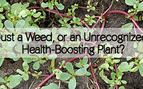 Just a Weed, or an Unrecognized Health-Boosting Plant?