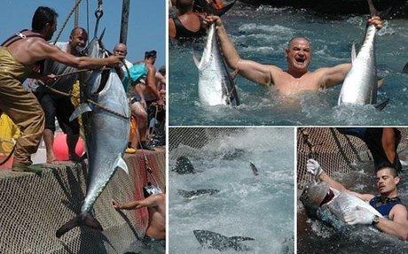WEB: Bluefin Tuna in the Mediterranean