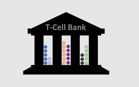 Cell Vault and Saving Immune Cells for Cancer Therapy