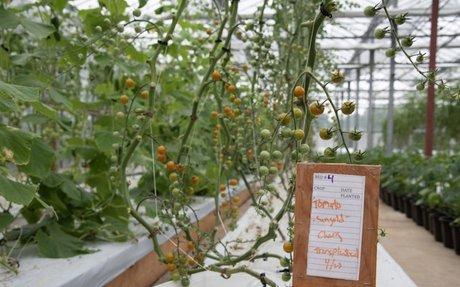 Island Grown Initiative, Island Food Pantry Announce Merger