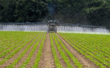 France eases ban on neonicotinoids to help sugar sector