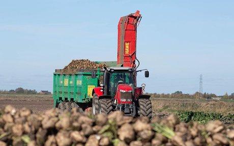 Plan for sugar beet to return to Scotland