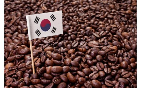 Defectors from North Korea are finding work in coffee!