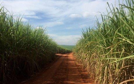 Archer vê aumento de 35% na produção de açúcar do CS, mas alerta sobre coronavírus