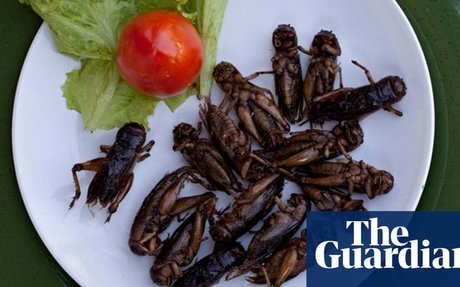 Are crickets the next foodie trend?