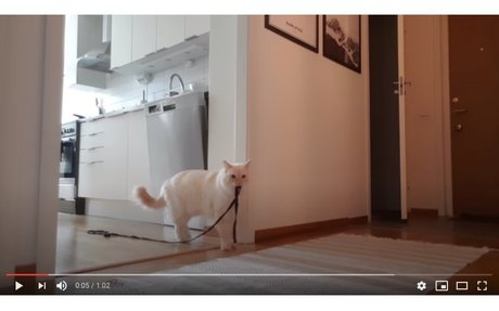 Cat left home alone VIDEOS