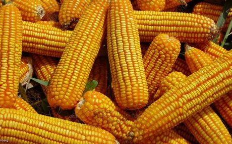 Research group assures South Africans that the country has ample food supplies